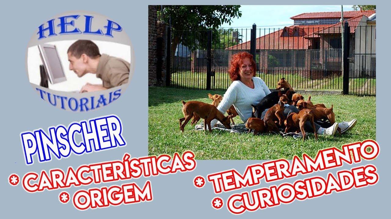 Pinscher Raças De Cachorros