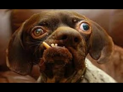 The 10 Ugliest Dog In The World Really Ugly Youtube