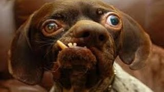 The 10 ugliest dog in the world really ugly