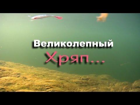 Rapala X- RAP 4, 7 и 13гр подводная съёмка! Хряп!