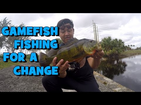 SHORE Fishing For PEACOCKS & CO In Florida! (Sunrise, FL)