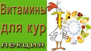 Витамины и добавки для кур. Лекция по птицеводству