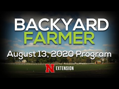 Backyard Farmer August 13, 2020