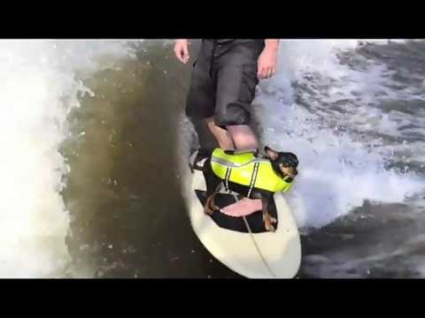ROSCO MY DOG LOVES WAKE SURFING, WAKESURFING DOG