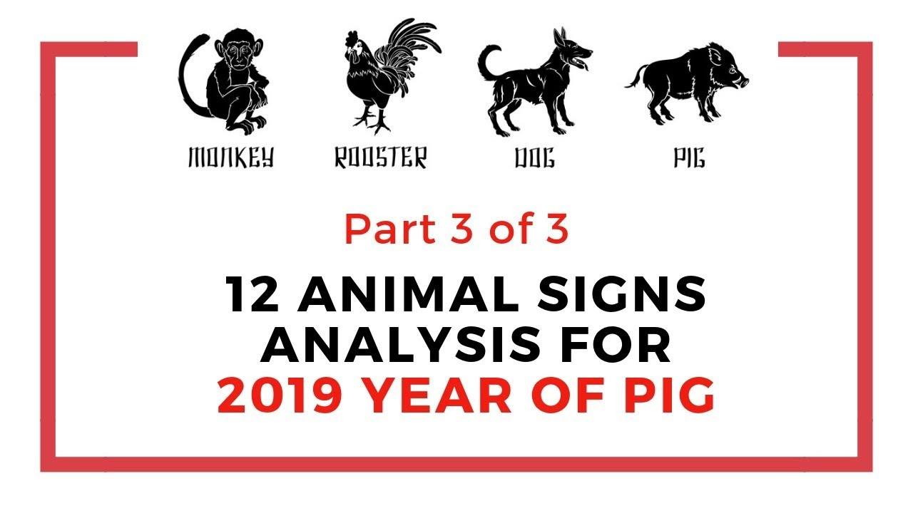 Part 3 of the 12 animal signs analysis for 2019 pig year: Monkey, Rooster,  Dog, Pig