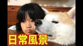 大型犬3頭の日常はこんな感じです シベリアンハスキー犬 老犬なので家...