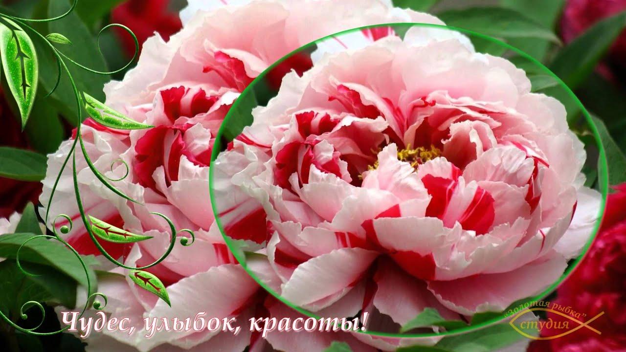 Поздравление розовой свадьбы