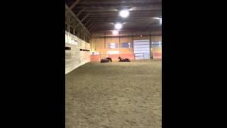 My weird horses