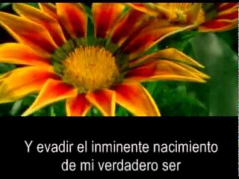 brooke fraser c.s.lewis song subt. español