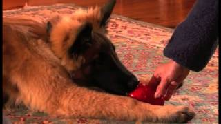 How To Create A Dog Housetraining Schedule