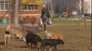 Ультразвуковые отпугиватели собак (экспертиза вещей ОТК)