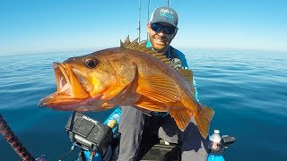 Kayak Fishing: Halibut, Calicos & Bonito 60 Miles Out  | Field Trips