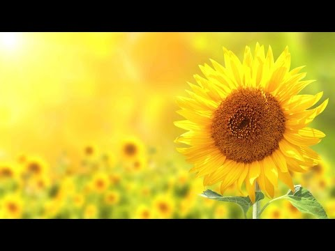 "Peaceful Music, Relaxing Music, Instrumental Music, ""Nature's Seasons"" by Tim Janis"