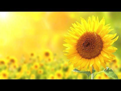 Peaceful Music, Relaxing Music, Instrumental Music, Natures Seasons  Tim Janis