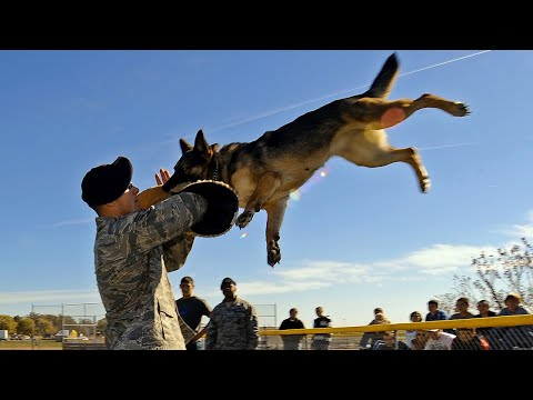 Собаки полицейские! Лучшие