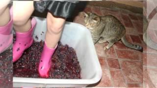 Варенье из винограда - рецепт. Давлю виноград. Весело!!!!