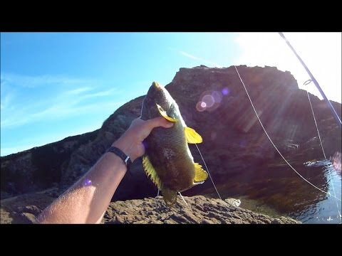 Shore Fishing - Rock Fishing for Wrasse with Slug-Go Soft Plastic Lures