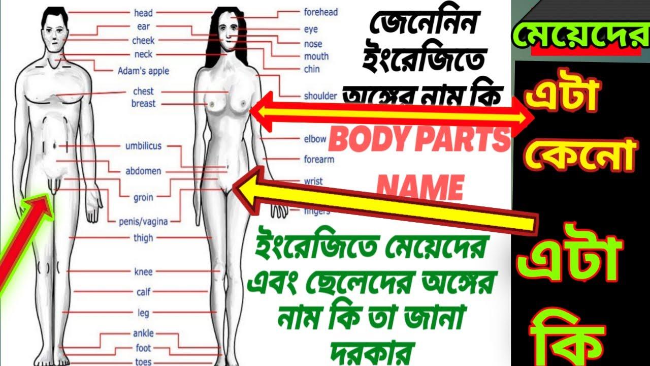 Download body parts name English to bangla body parts name,