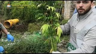 Piantagione di cannabis vicino Scarperia. Due giovani nei guai