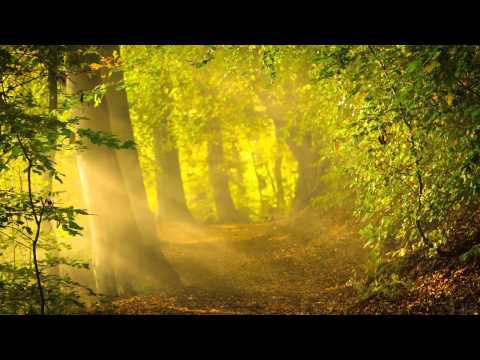 Forest Sounds with Relaxation Music - Sleep Music