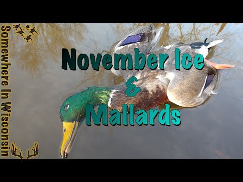 Mallards And ICE! November Cold Front: Wisconsin Public Land Duck Hunt 2017