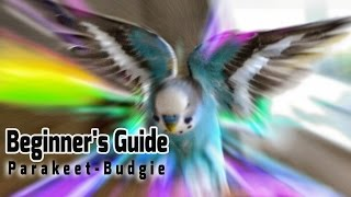 How to take Care of a Parakeet | Budgie [Beginner