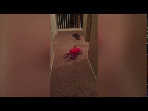Check Out This Pup Teaching A Kid How to Be a Dog. Ludicrous!