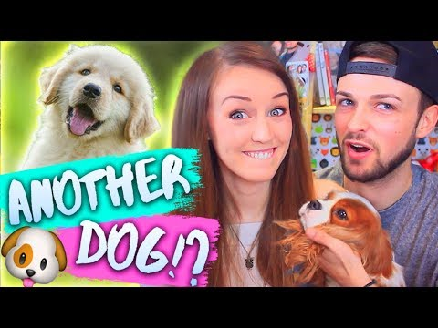 WE'RE GETTING ANOTHER DOG!? 🐶💕