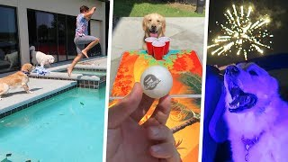 SWIMMING, PONG, and FIREWORKS! (Dog Fourth of July Party)
