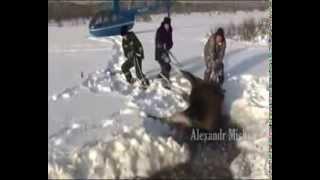 Люди приходят на помощь животным