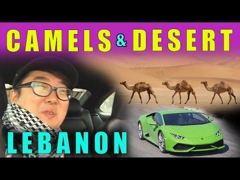 CAMELS & DESERT OF LEBANON