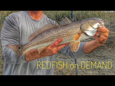 The Easiest Way To Catch RedFish - Low Country Fishing - Savannah Ga