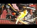Masteran Kenari Lagu Enak Untuk Burung Kicauan  Mp3 - Mp4 Download