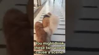 SERVICE DOG TAKES BLIND DOG TO THE MALL