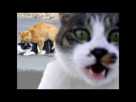 Top Funny Cats Vines of 2016! [Most See]  Funny Cat Video Compilation