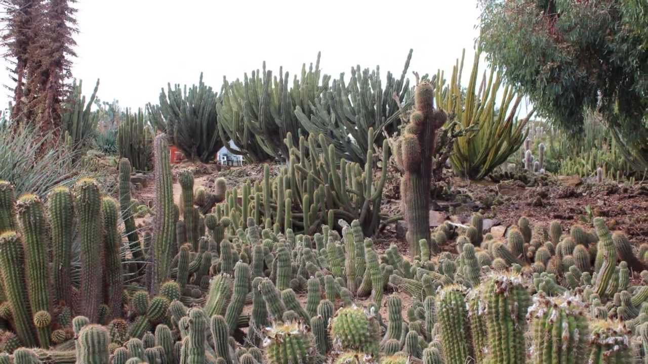 Australiau0027s Largest Cactus Garden. Cactus Country   YouTube