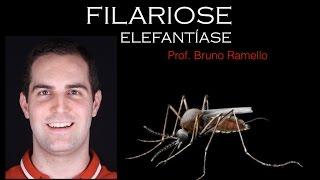 Verminoses - Filariose ou Elefantíase