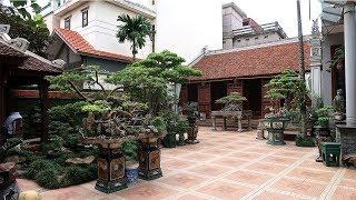 Thăm một sân cây cảnh nghệ thuật và nhà cổ đẳng cấp ở Hà Nội