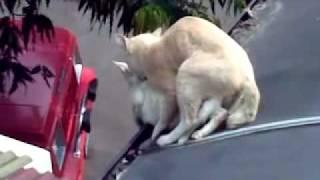 jeddah ngewek kucing