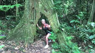 Tiny House No Mortgage, Go To Tahiti! The Island Of Moorea 2018