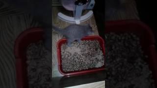 котята учатся ходить в лоток