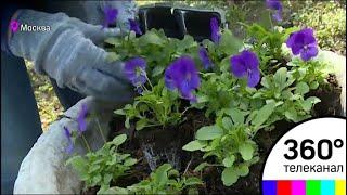 В парке «Сокольники» провели пятый всероссийский экологический субботник «Зеленая весна»