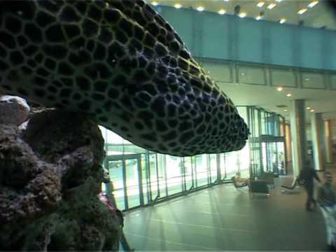scandia aquariums inside the aquariums of cma cgm