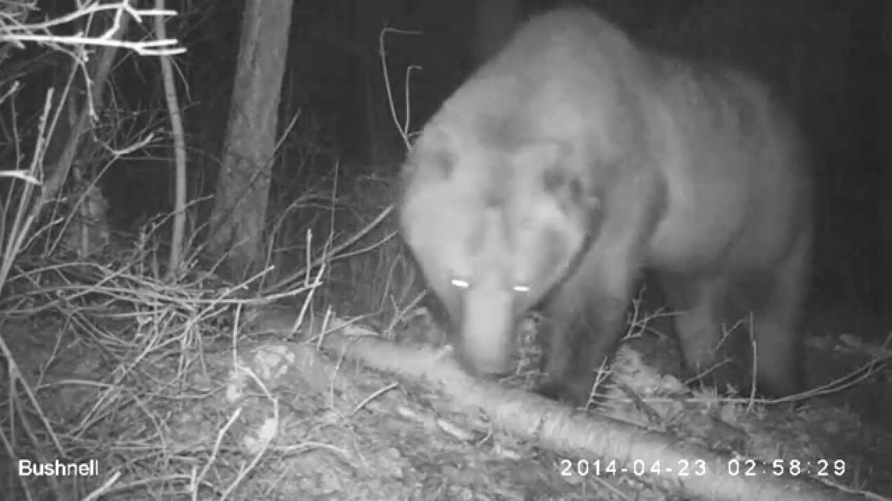 caught nude on trail cam