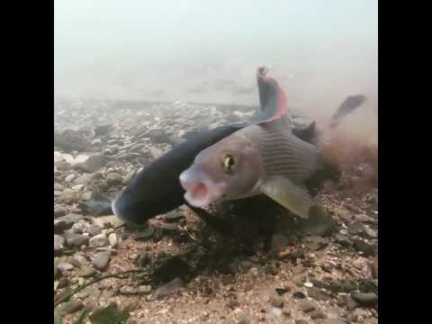 having anal sex with a fish