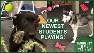 Meet Our NEWEST STUDENTS!