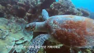 로미와 줄리의 다섯번째 이야기(세부2일차 바다거북이를 …