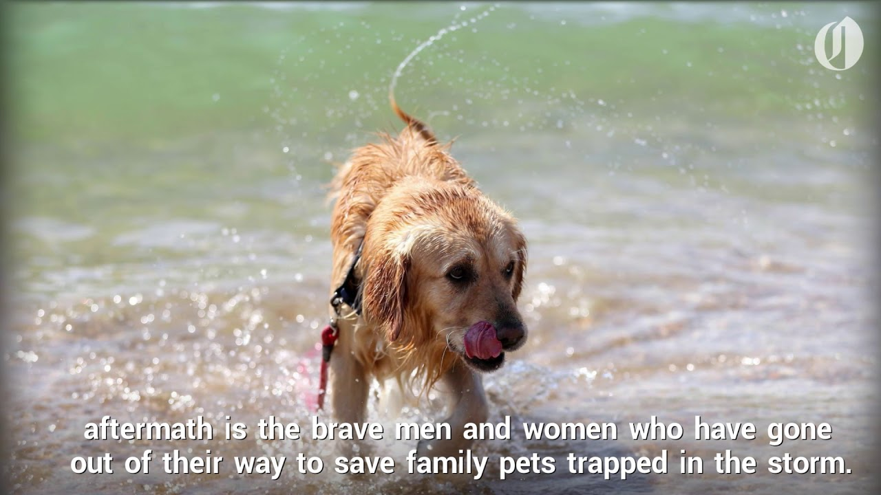 rescuers-save-pets-during-hurricane-harvey-in-texas