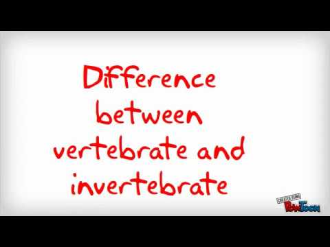 Difference between vertebrate and invertebrate