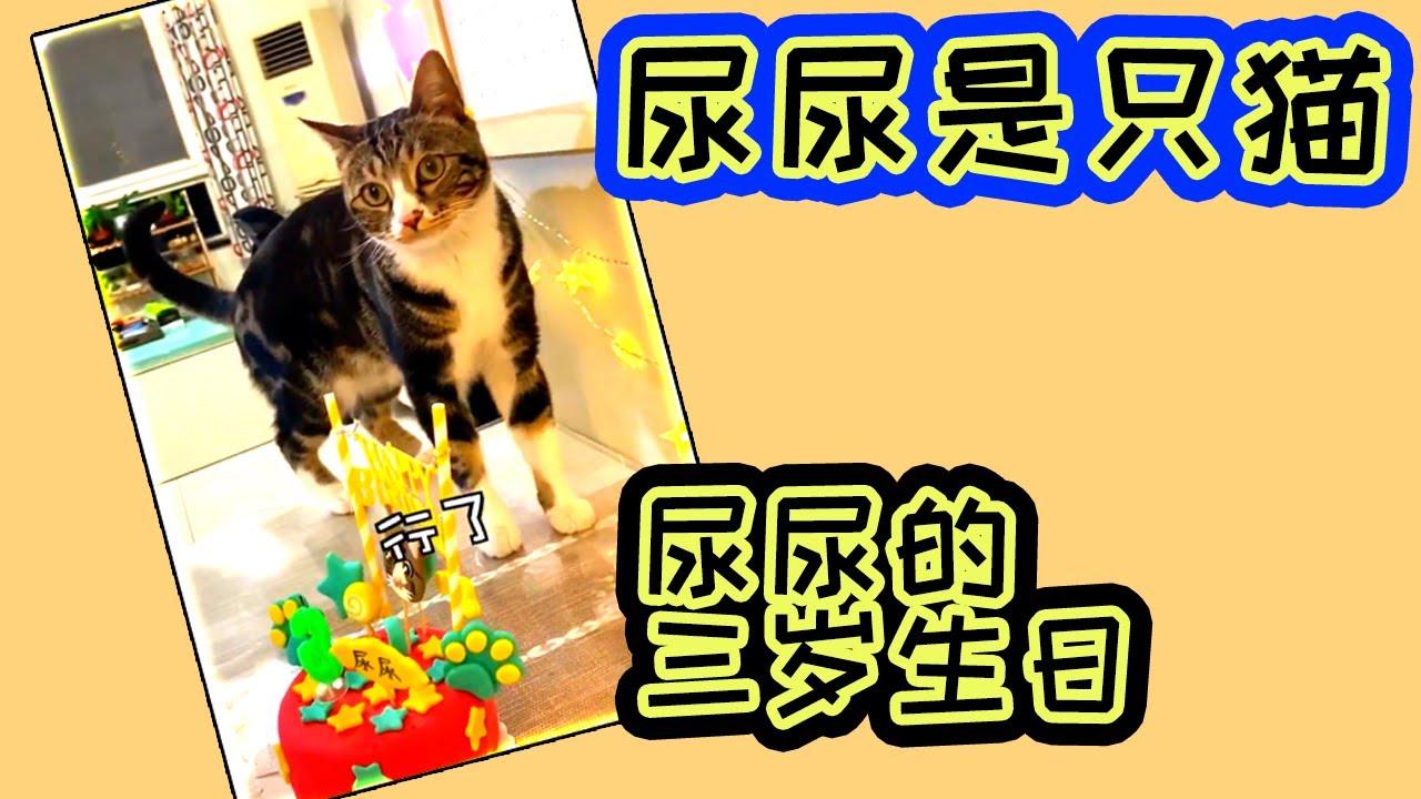 【尿尿是只猫】尿尿的三岁生日! #尿尿是只猫 #尿尿猫 #抖音 #搞笑
